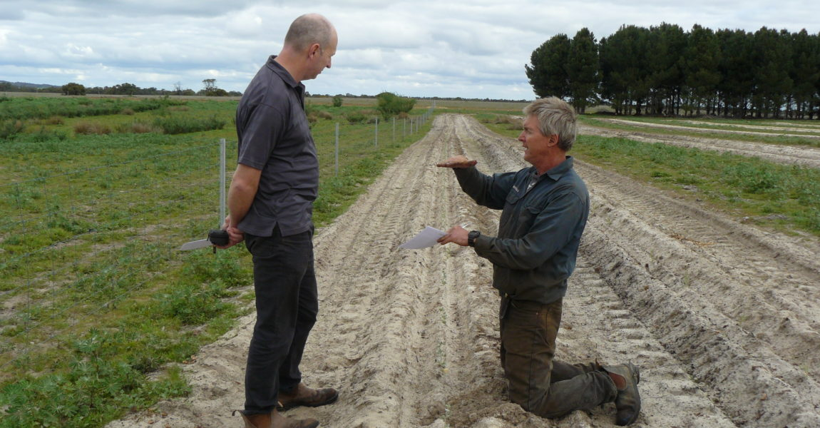 Koojan farmer demonstrates soil amelioration