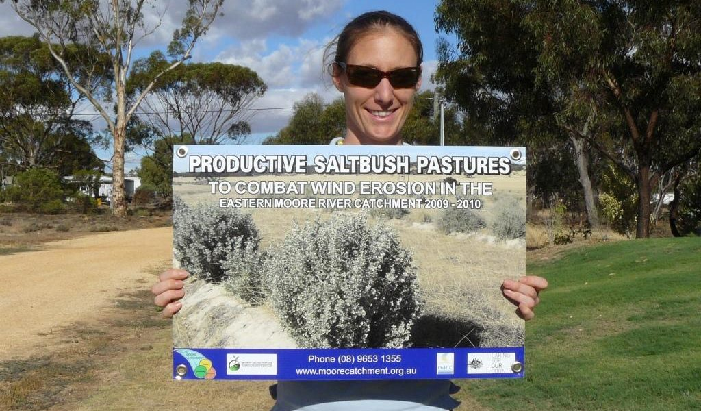 Super results for Moore catchment saltbush project