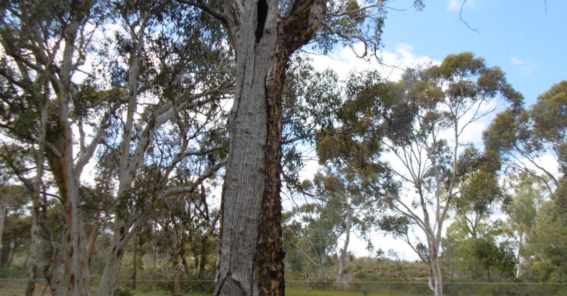 SNRMO A15006 – Enhancing Mogumber Town Reserve as a local natural asset
