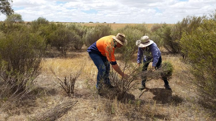 Making extra income from native trees and shrubs