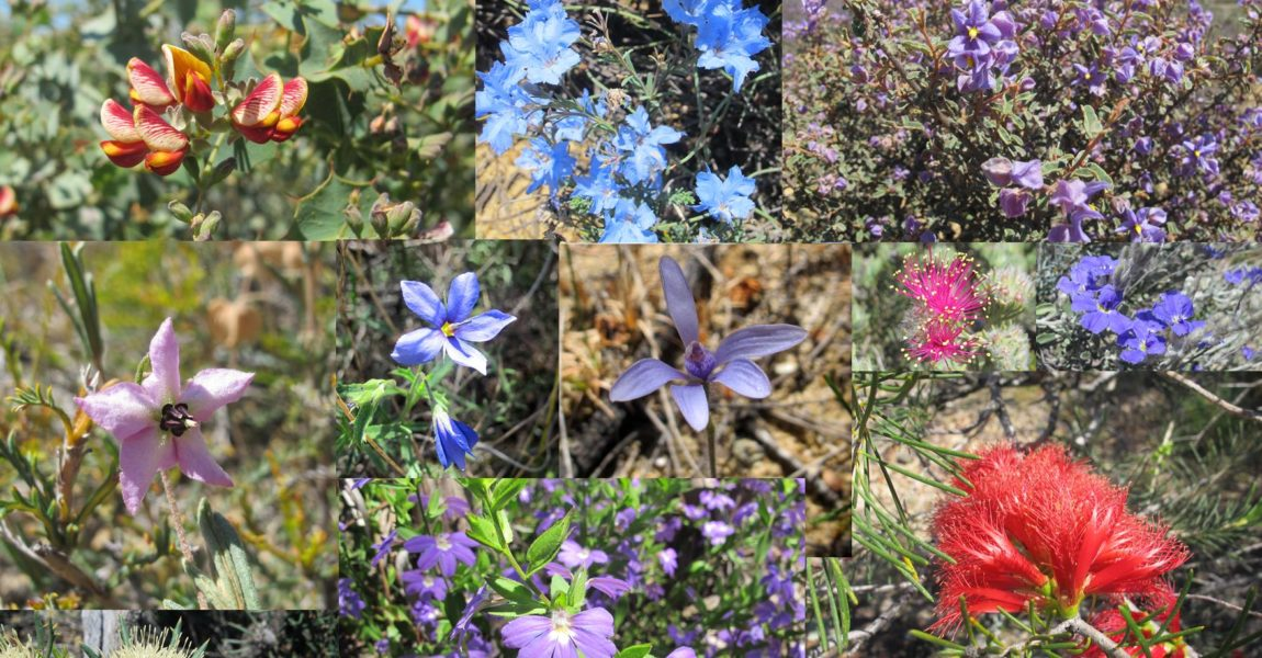 SNRMO – A17079 Conserving and enhancing the Moore's natural biodiversity assets Stage 3