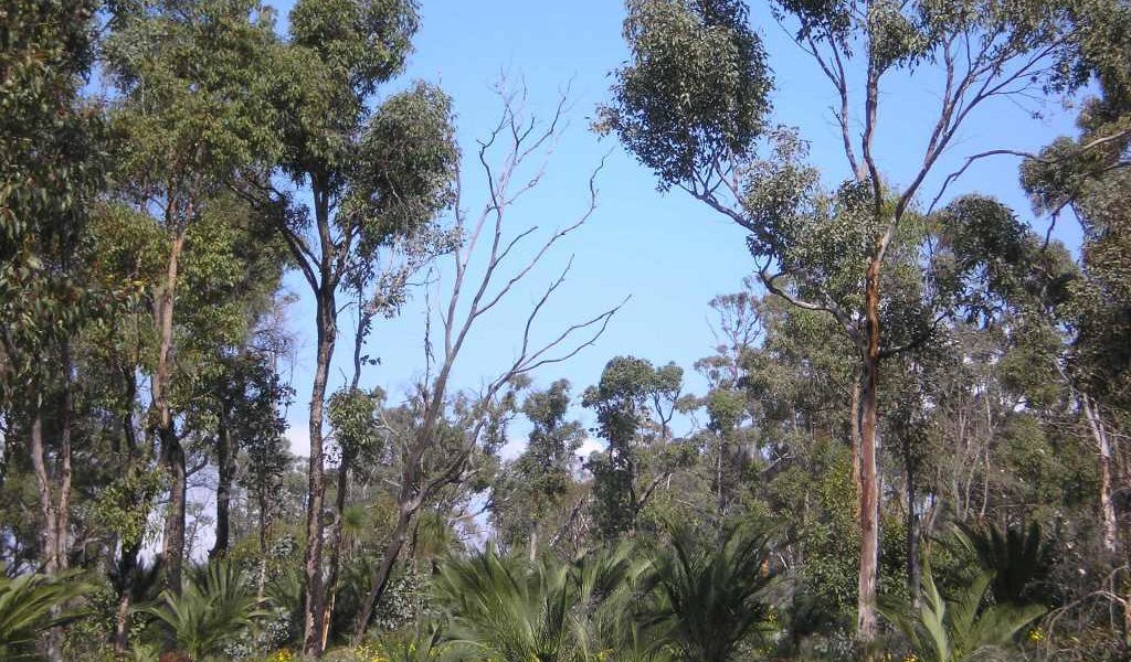 SNRMO – CSGL19024 Conserving, restoring and promoting the Moore River Catchment's natural biodiversity
