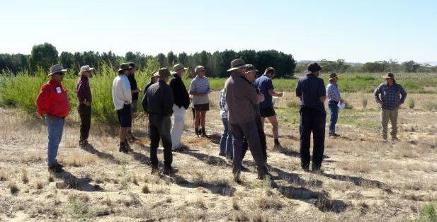 Koojan soil improvement trial inspires local farmers