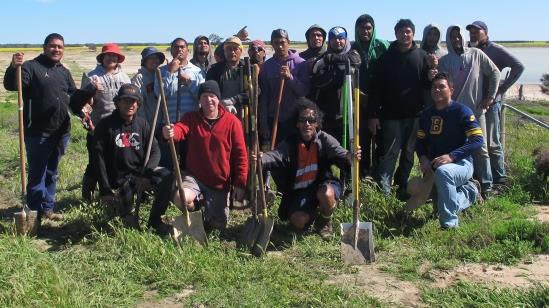 Stabilising unproductive land using NyPa grass