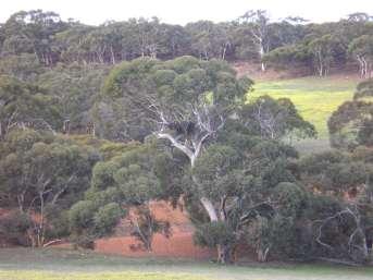 Hidden Treasurers Protect your bush