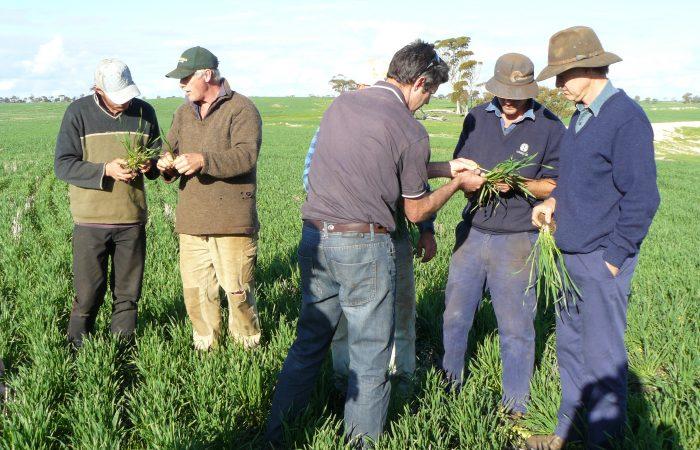 MLA – B FDP 0030: Moora Miling – Whole farm profit of grazing crops